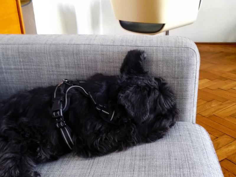 Bürohund Lani schläft in neuer Zweigniederlassung
