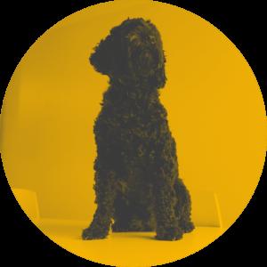 Neuer Bürohund: Marple!